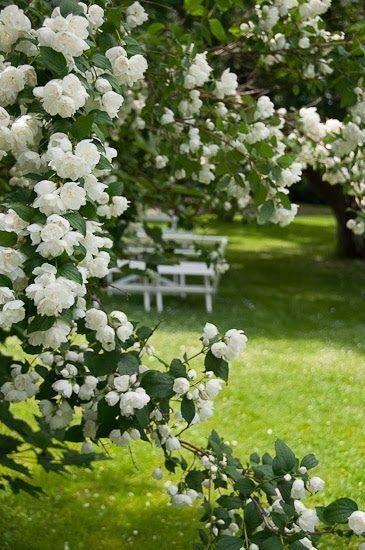Photos de printemps/été - Page 14 39335110