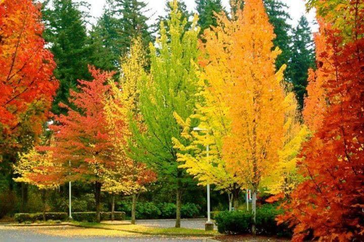 Images d'automne  - Page 3 42266810