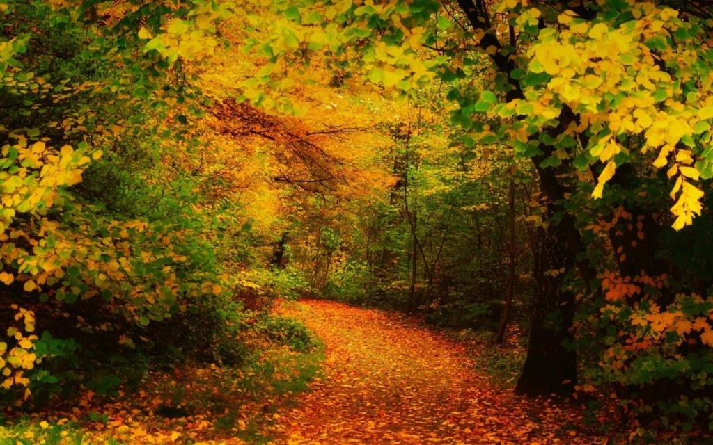 Images d'automne  - Page 7 42301310