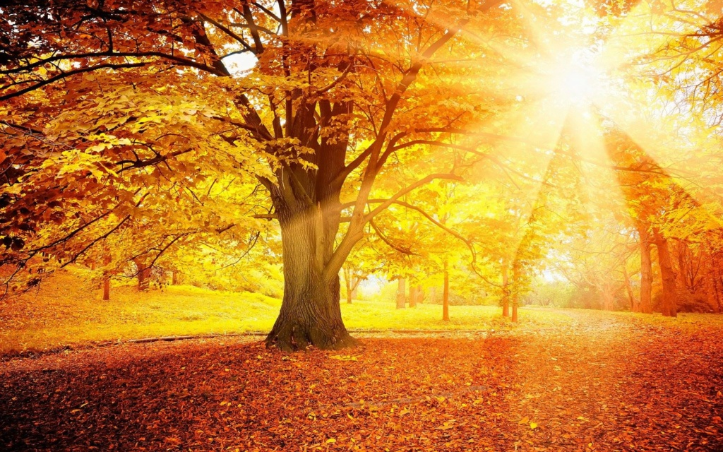 Images d'automne  - Page 2 42311010