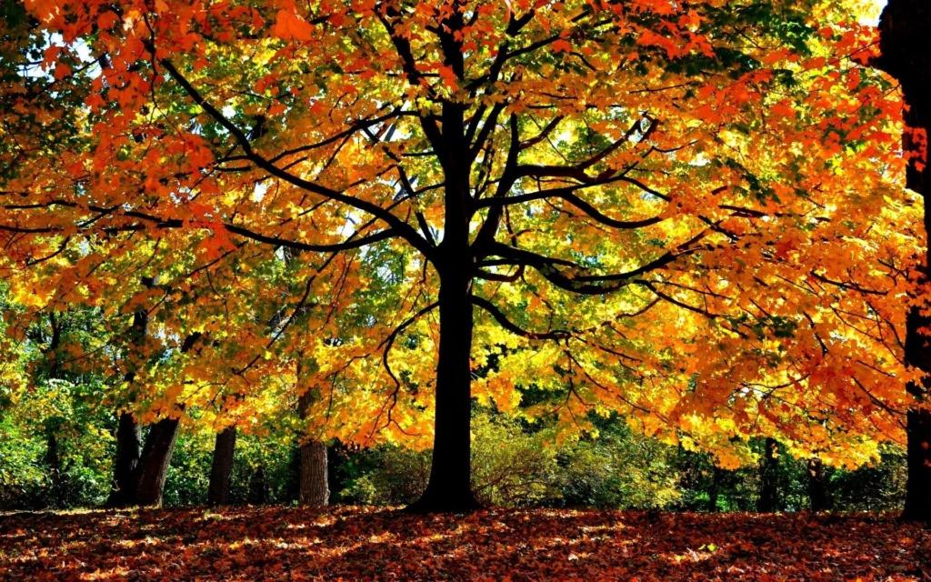 Images d'automne  - Page 2 42349610