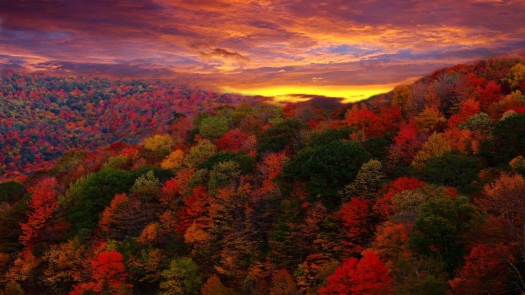 Images d'automne  - Page 2 42350810
