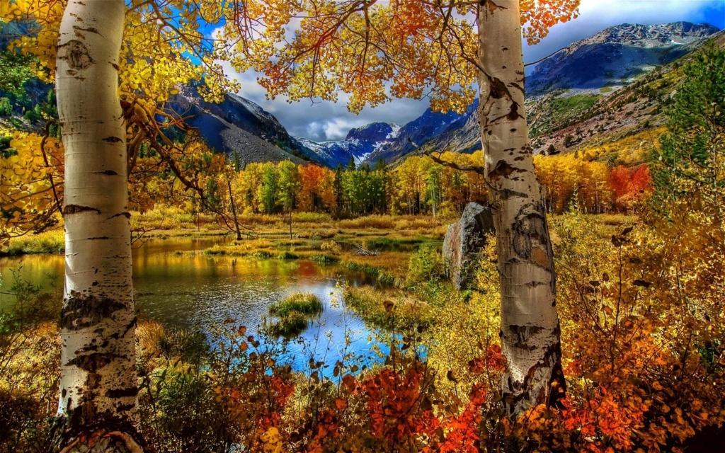 Images d'automne  - Page 7 42351610