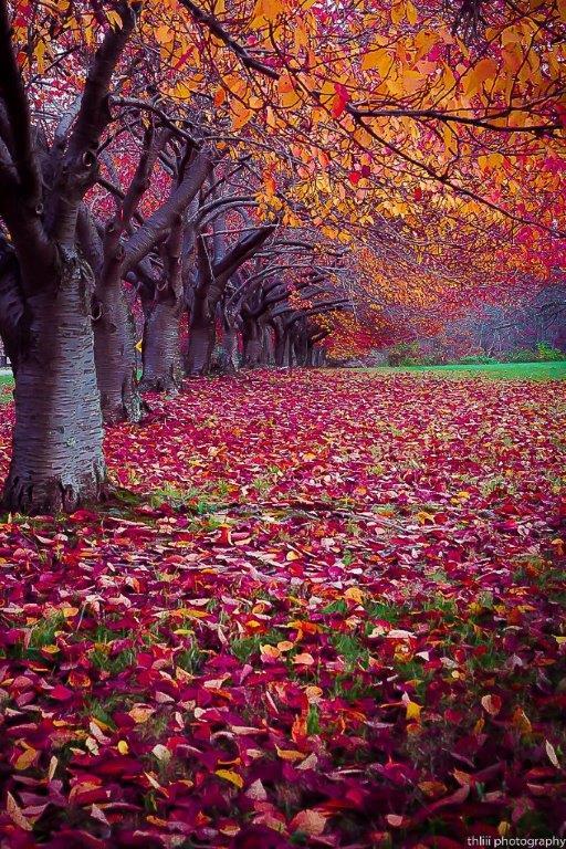 Images d'automne  - Page 3 42381510