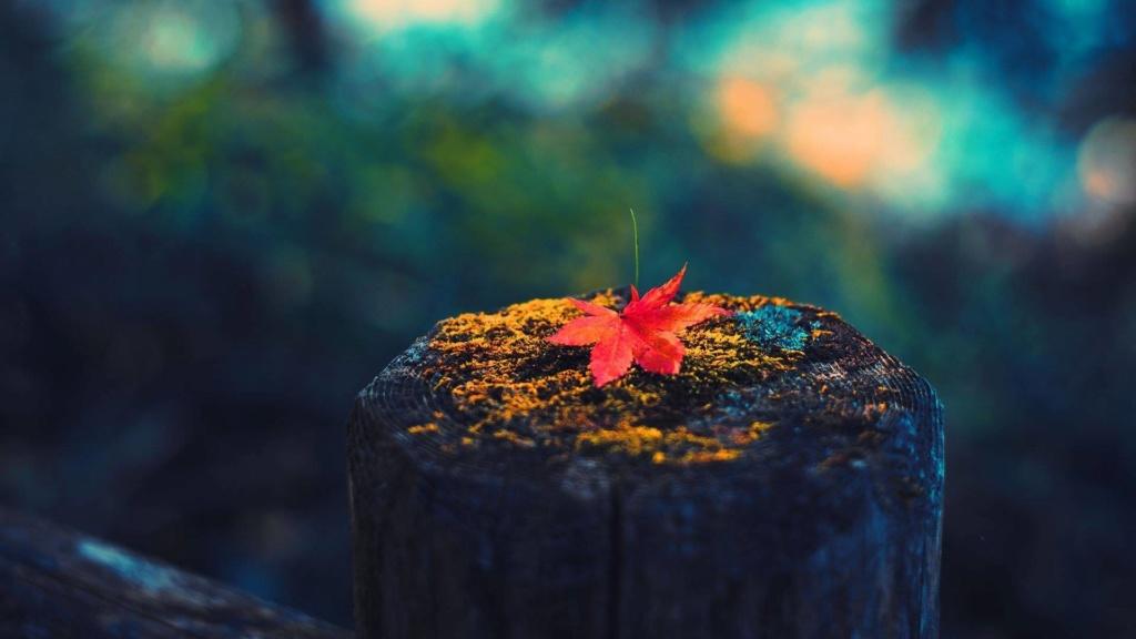 Images d'automne  - Page 2 42382510