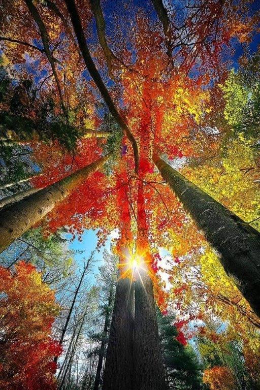 Images d'automne  - Page 3 42720610