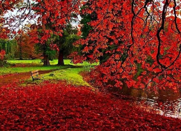 Images d'automne  - Page 2 42743611