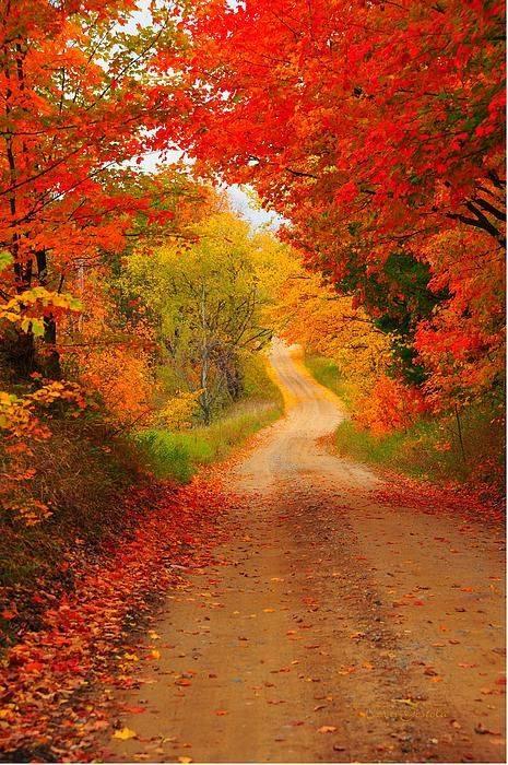 Images d'automne  - Page 2 43241510