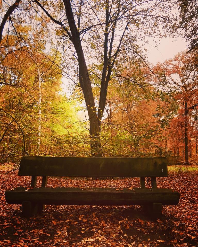 Images d'automne  - Page 3 44237910