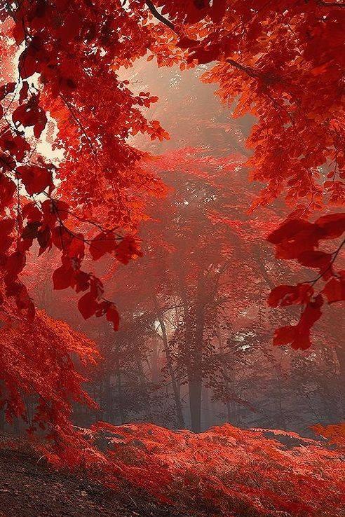 Images d'automne  - Page 3 44253211