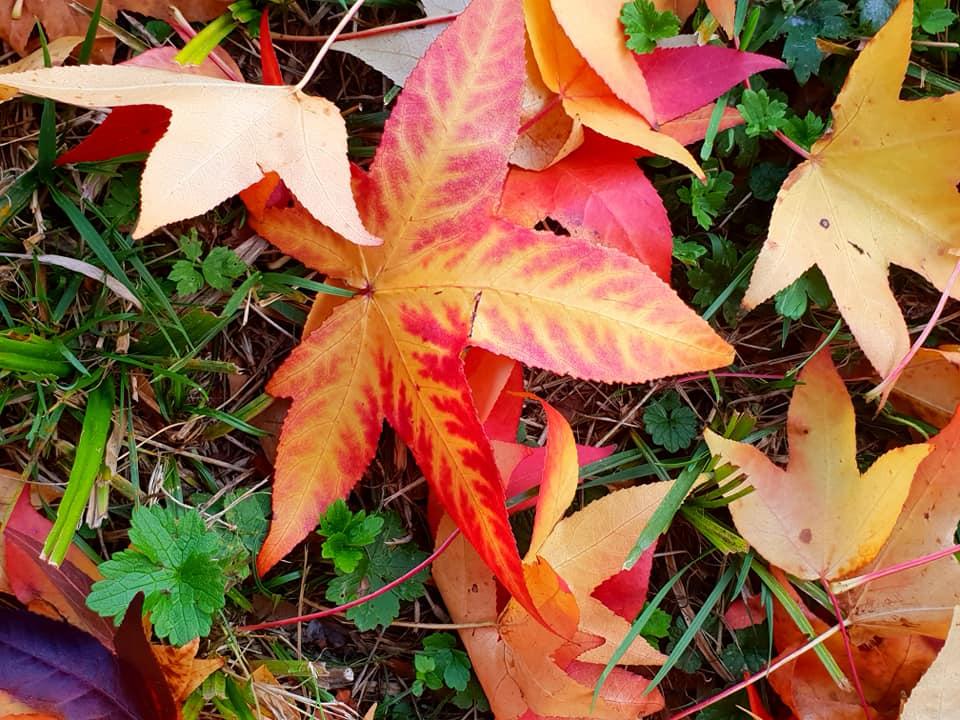 Images d'automne  - Page 3 44511010