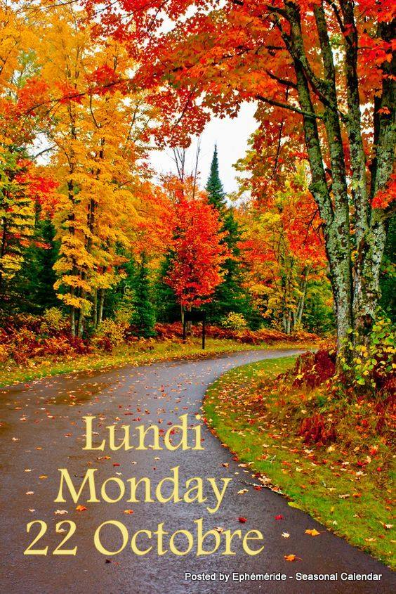 Images d'automne  - Page 3 44540110