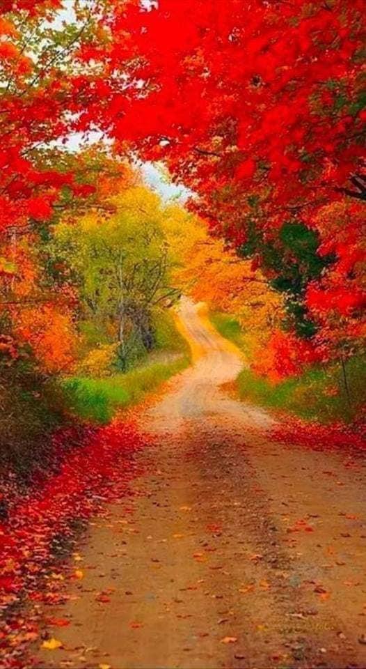 Images d'automne  - Page 3 44540111