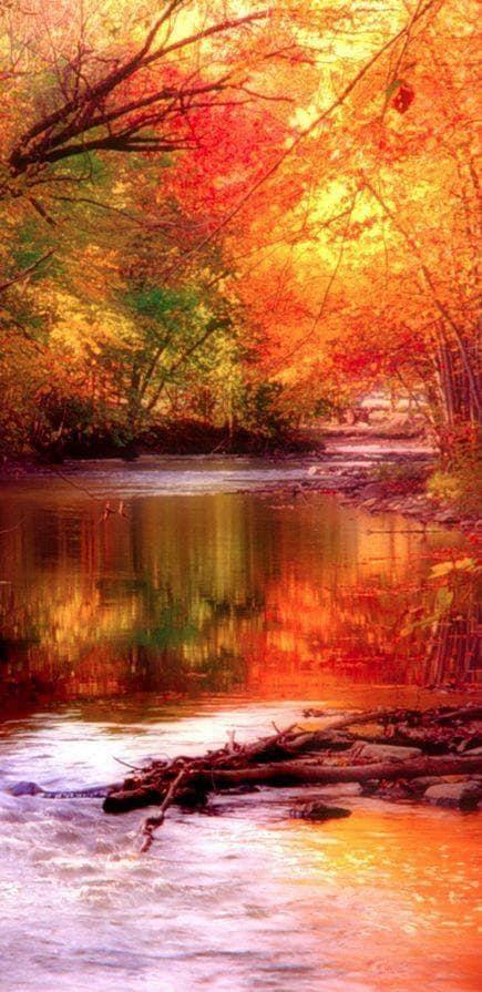 Images d'automne  - Page 3 44739210
