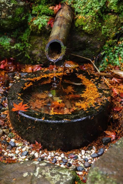 Images d'automne  - Page 5 45488711