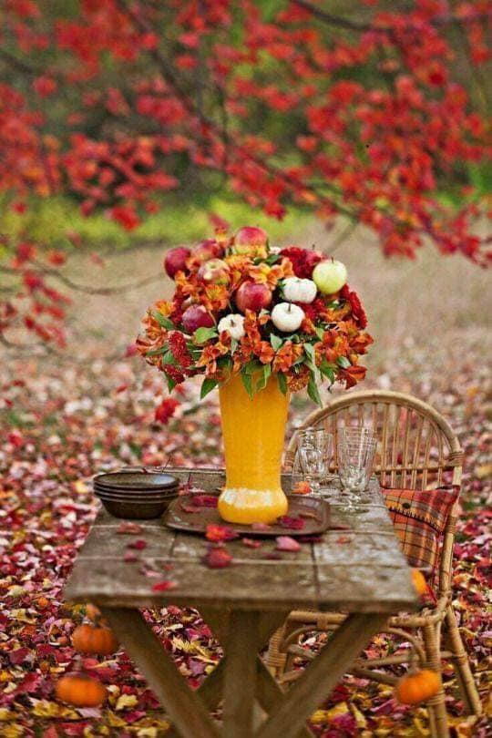 Images d'automne  - Page 5 45800810