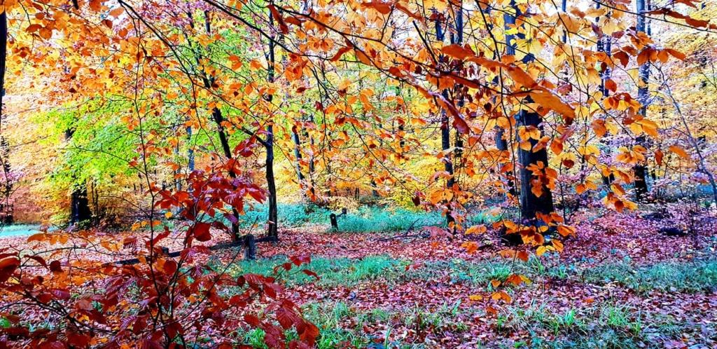 Images d'automne  - Page 7 45809610