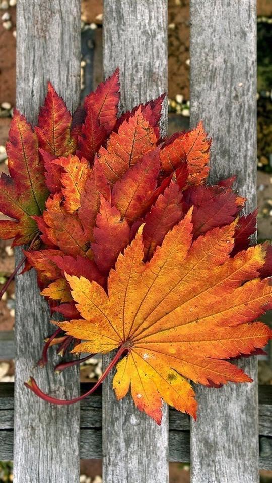 Images d'automne  - Page 5 45887110