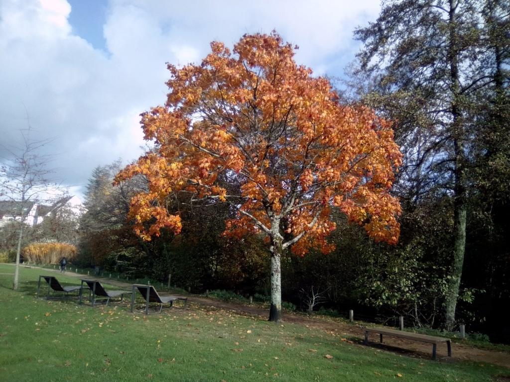 Images d'automne  - Page 5 45960110