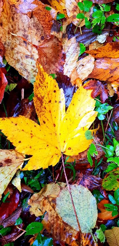 Images d'automne  - Page 7 46085410