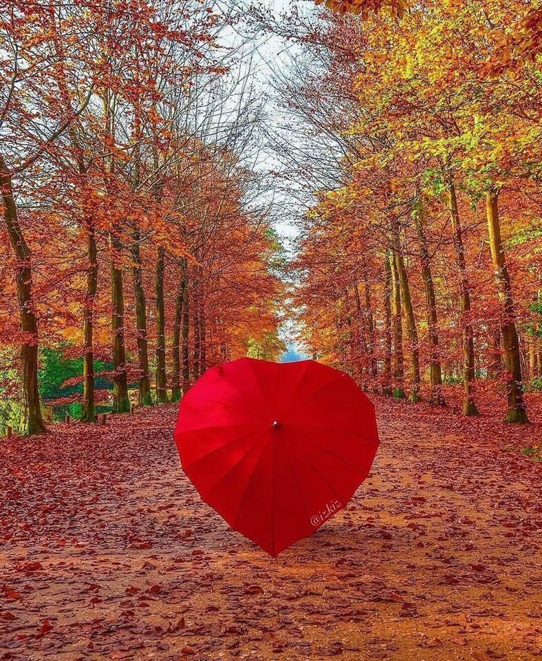 Images d'automne  - Page 5 46270510
