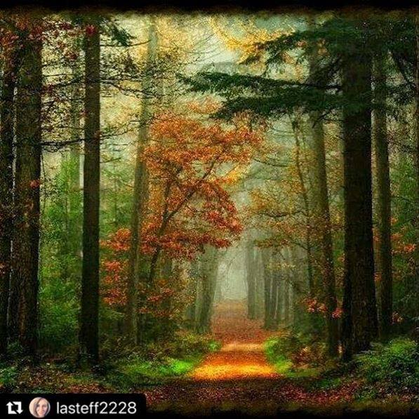 Images d'automne  - Page 7 47686110