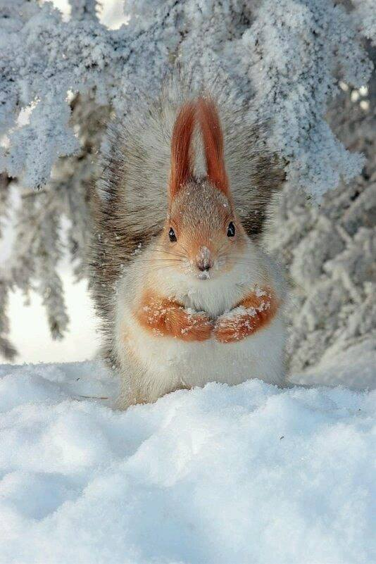 Images d'hiver - Page 3 48385710