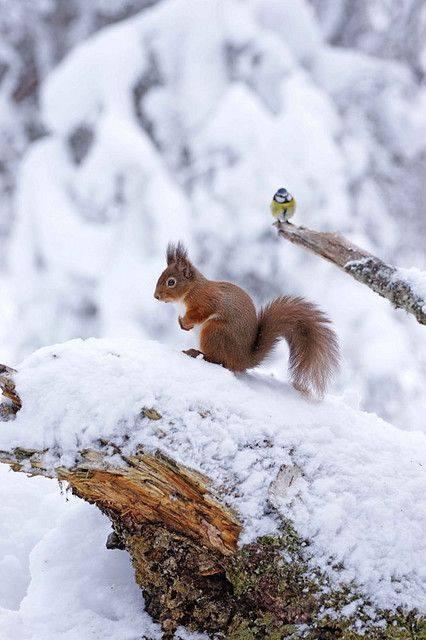 Images d'hiver - Page 3 50084410