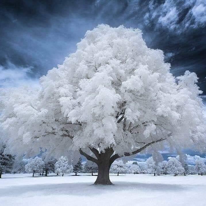 Images d'hiver - Page 3 50574010