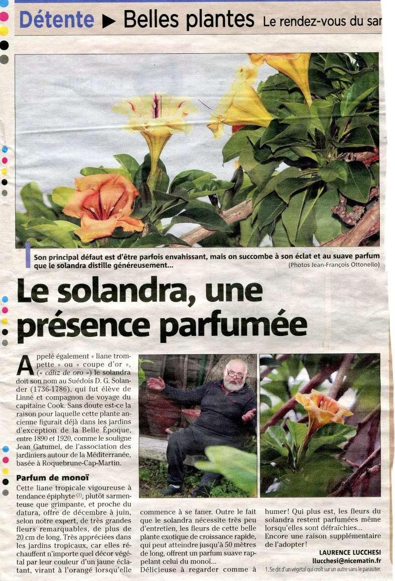 Solandra maxima - Page 2 Articl10