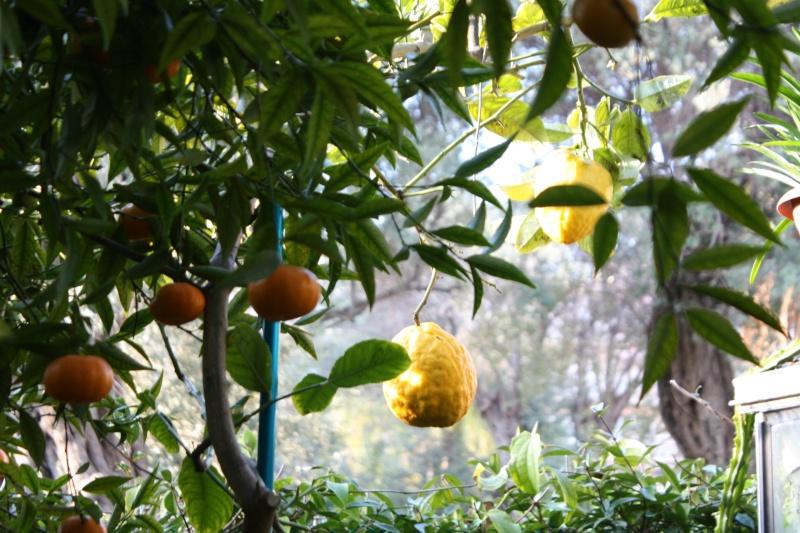 La saison des envois d'agrumes a commencé ! Cydrat10