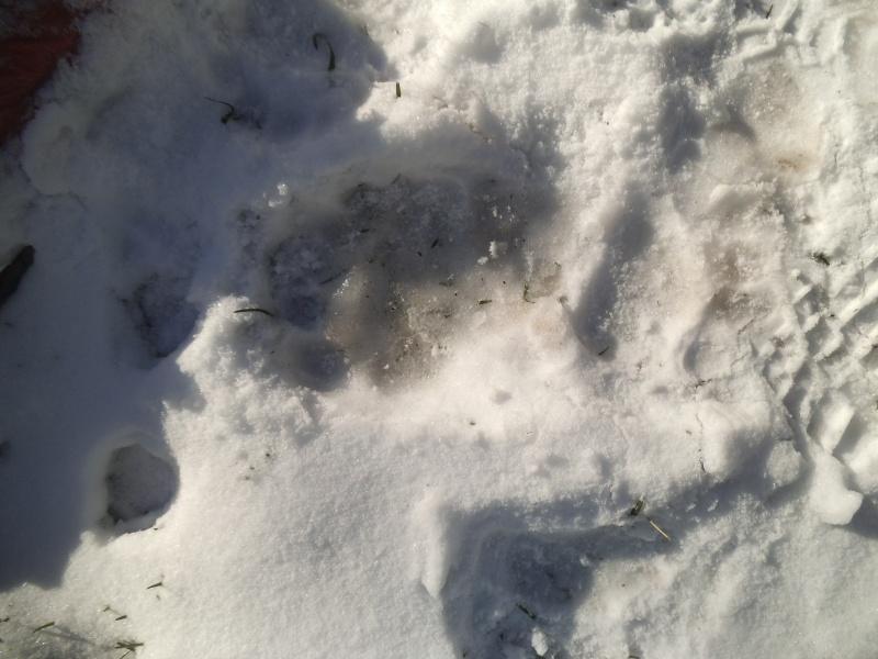 JAN-FEV les animaux et l'hiver : vos plus belles photos Dscf1310