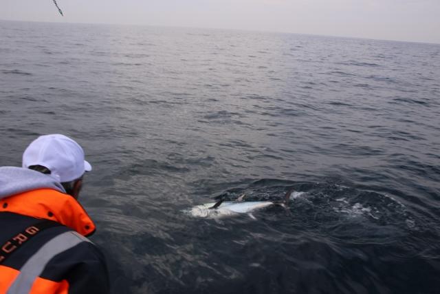 Compte rendu de notre sortie de pêche au thon Img_7924