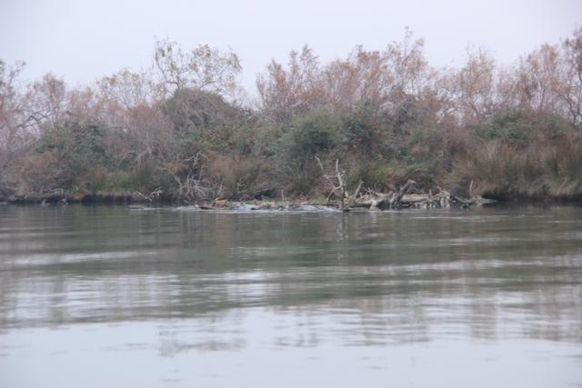 Compte rendu de notre sortie de pêche au thon Img_8122