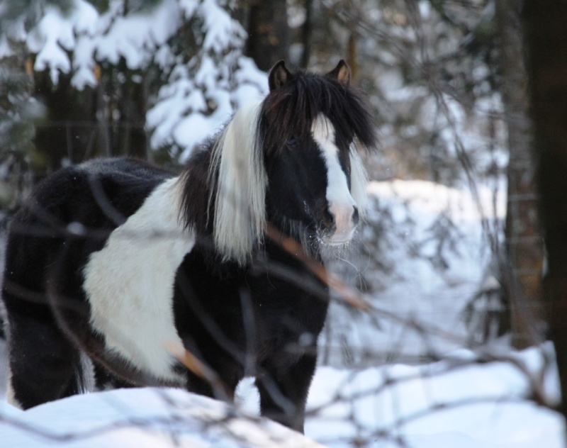 Mon petit cheval Img_9418