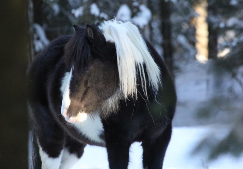 Mon petit cheval Img_9419