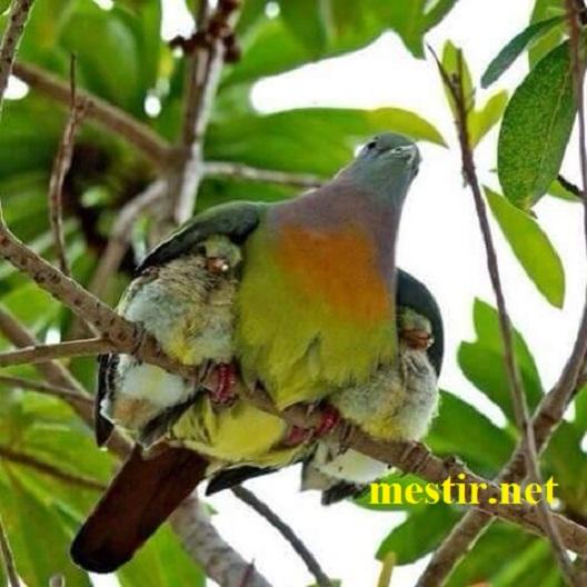 L'amour maternel  12399310
