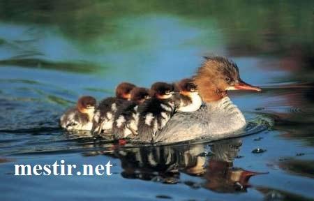 L'amour maternel  Ab10