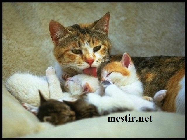 L'amour maternel  Amo10