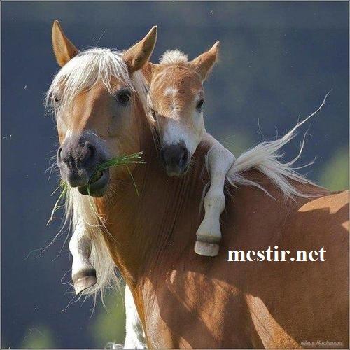 L'amour maternel  Amour-10