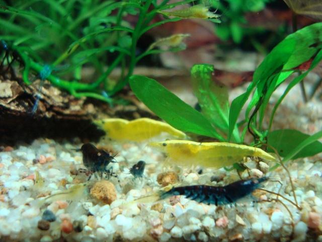 Demande de renseignements pour maintenance de crevettes sur sol technique Dsc00010