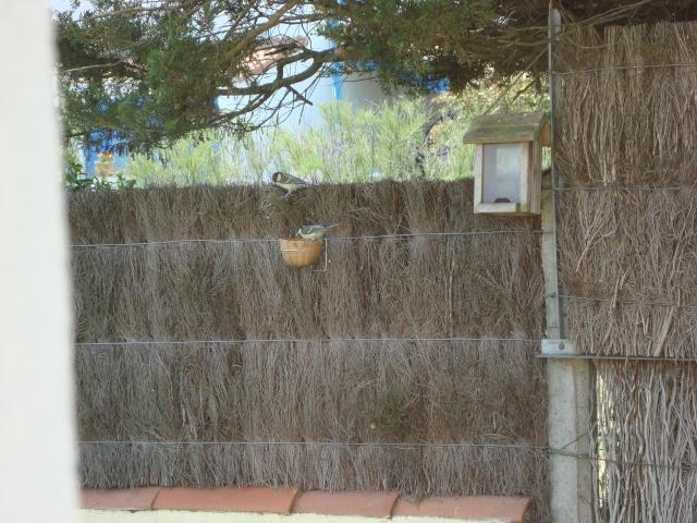 Les animaux de nos jardins Dsc01510