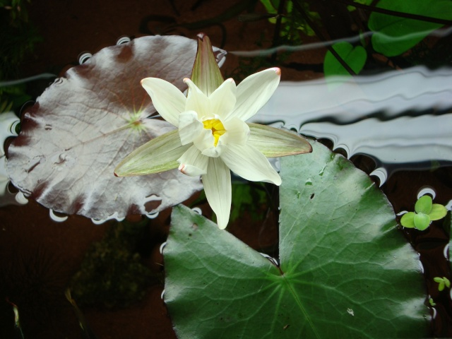 Mes plantes Dsc01813