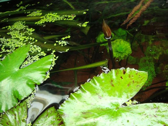 Mes plantes Dsc04711