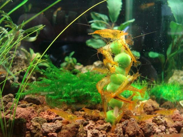 Demande de renseignements pour maintenance de crevettes sur sol technique Dsc09210