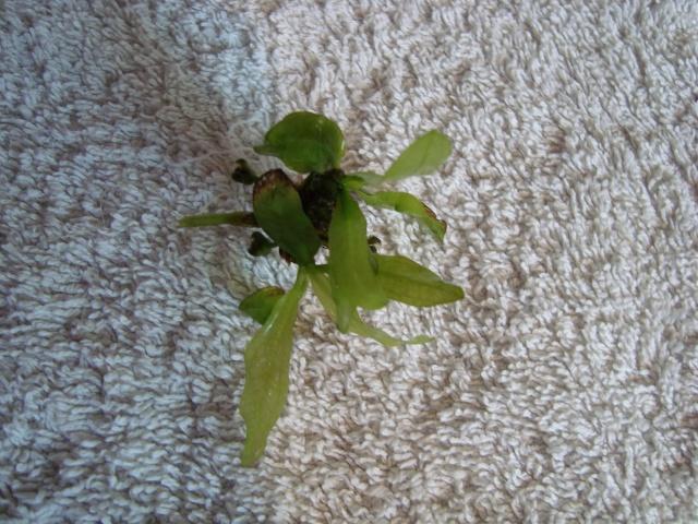 Mes plantes Dsc09410