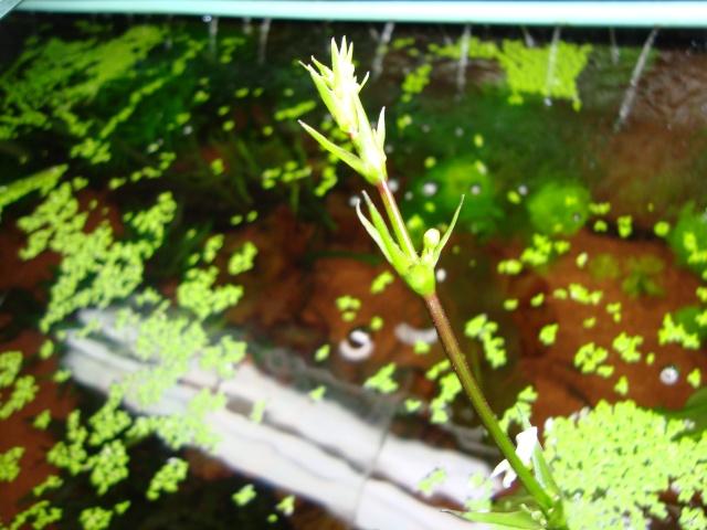 Mes plantes Dsc09610
