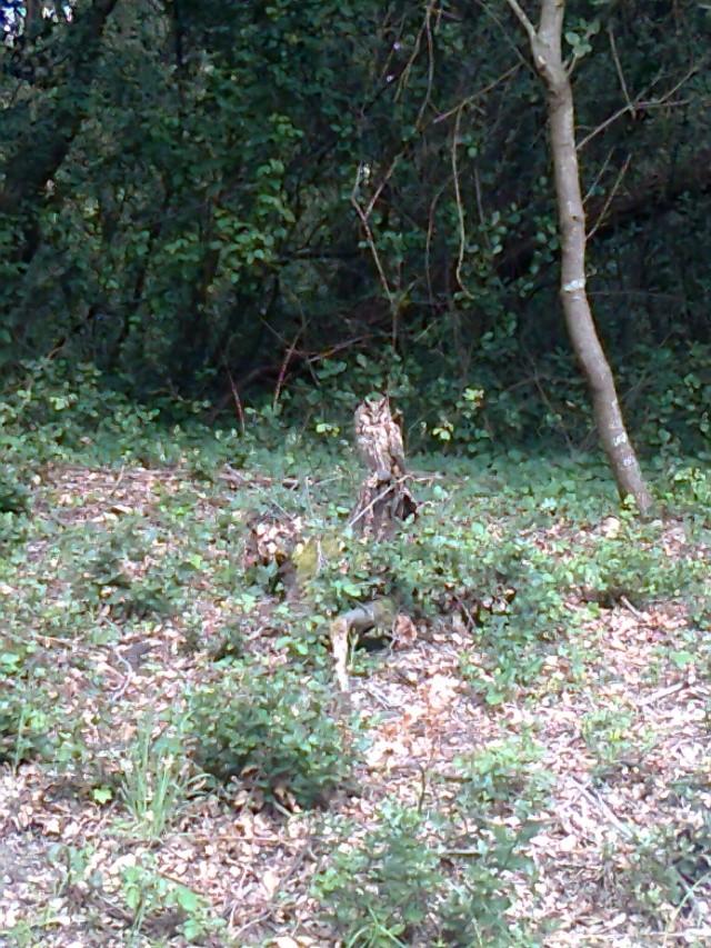Les animaux de nos jardins Photo010