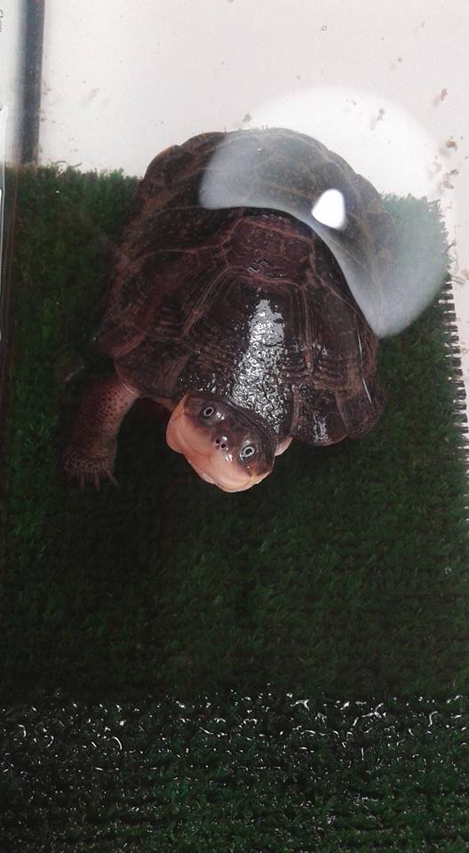 tortuga Tortug11