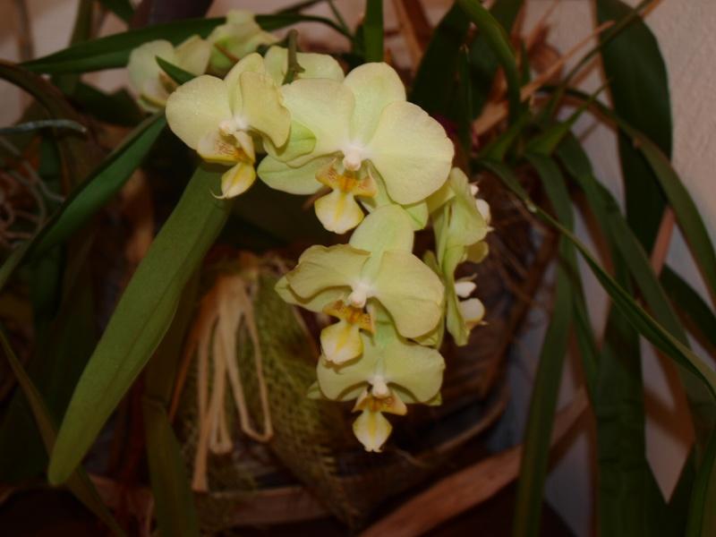 Exposition d'orchidées à Paris - Page 2 Photo_22